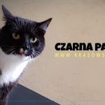 Kot Czarna Pantera w akcji