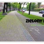 Zielony pas na chodniku